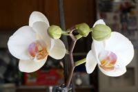 My Beautiful Orchids
