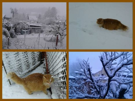 Winter on DL. For our friend Nev ☺♥☺