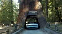 Chandelier Tree Drive-Thru