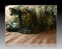 69 My Kitty Cat