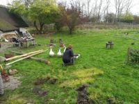 Feeding the geese.