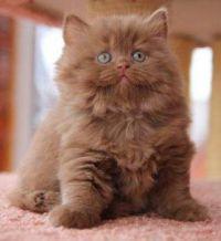 Another Cutie Pie :)