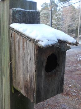 old winter blue bird house