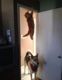 Hmmmm, I thought I heard a cat in here.