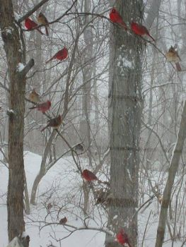 Birds in snow drenched trees
