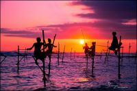 Sri Lanka sunset stilt fishing