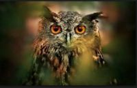 THEME FOREST ANIMALS:- Owl