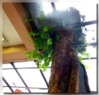 Tree (growing from inside a resto...)