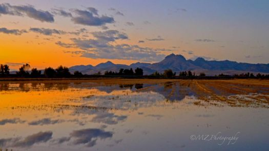 Sutter Buttes and flooded rice fields by MZ Photography