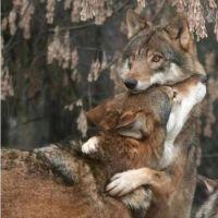 Give me a hug !