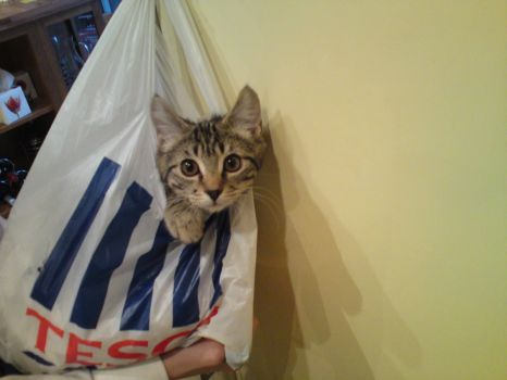 Kitten in a bag!!