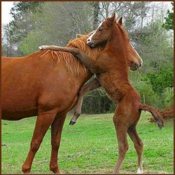 Mother & Foal