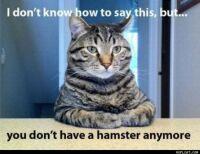 no hamster