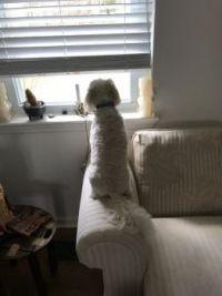 Scarlett surveying her territory
