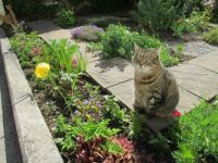 Milly - Garden patrol finished, posing for photo .....