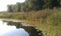 Love this little lake