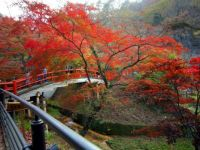 Autumn in Japan 4 of 4