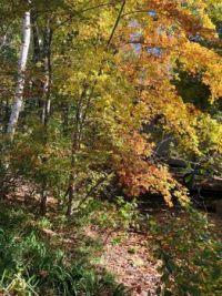Autumn Shades of Yellow