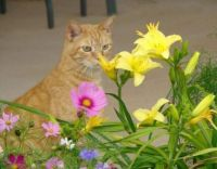 Izzy smelling the flowers