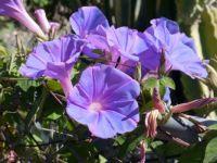 Pretty Lavender Flowers