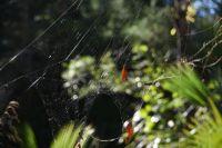 What a web!