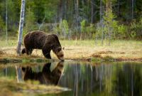 Marsel Van Oosten ~ Grizzly Reflection