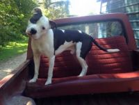 Our dog Diesel