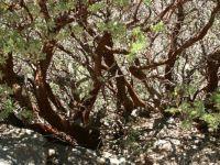 Sequoia np 02