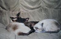 kim, cheetah en marron, my cats long ago.