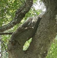 Spot the Squirrel?