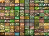 collage of crop circles