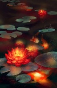 Koi Fish in Lotus Pond