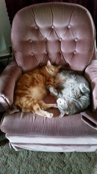 Cats on new chair