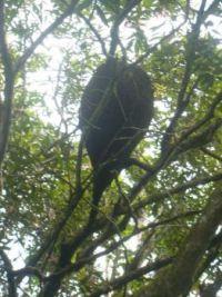 An ants nest