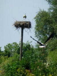 Vondelpark storks update #2