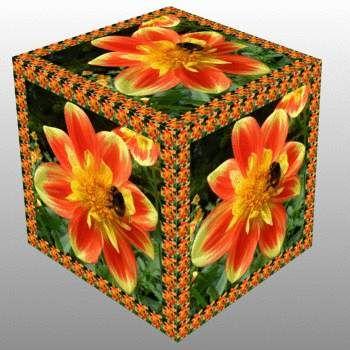 Jiřina se čmelákem v kostce...   Dahlia with a bumblebee in a cube...