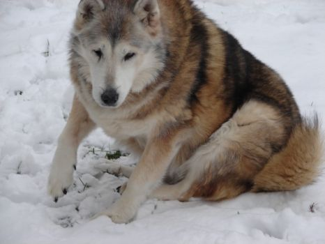 In memory of Jenna who loved snow 1998-10/17/2011 I will always love and miss her