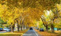 Fall Scenes #1