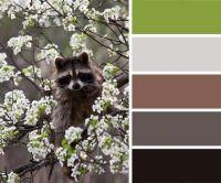 Raccoon in a Tree