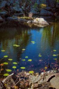 Lake at John Burroughs Nature Sanctuary