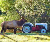 Elk, Benezette, PA 4