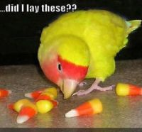 Eggs?
