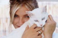 Cameron Diaz.... a Cat Lover