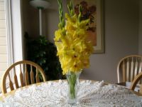 GOLDEN GLADIOLAS