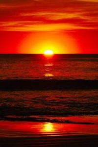 1  ~  'Red & Orange' ~ S.s.