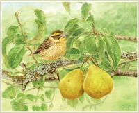 Bird with fruit