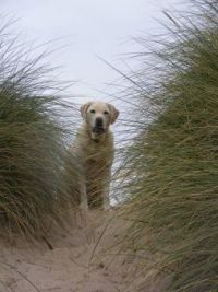 Dog in dunes