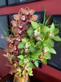 Weekly orchids