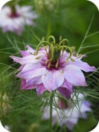 Nigella Ragge/ Lady Flower