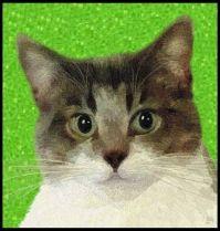 Cats I Know - Minnie - Portrait Painting